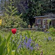 sunny magic lake garden